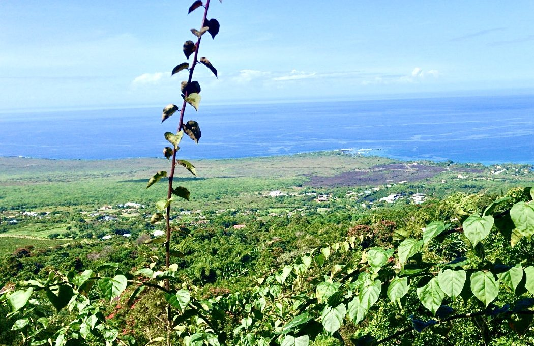 View at The Coffee Shack - The Big Island of Hawaii