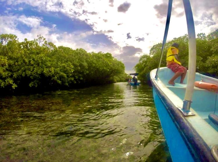Dolphin Tour - Bocas del Toro