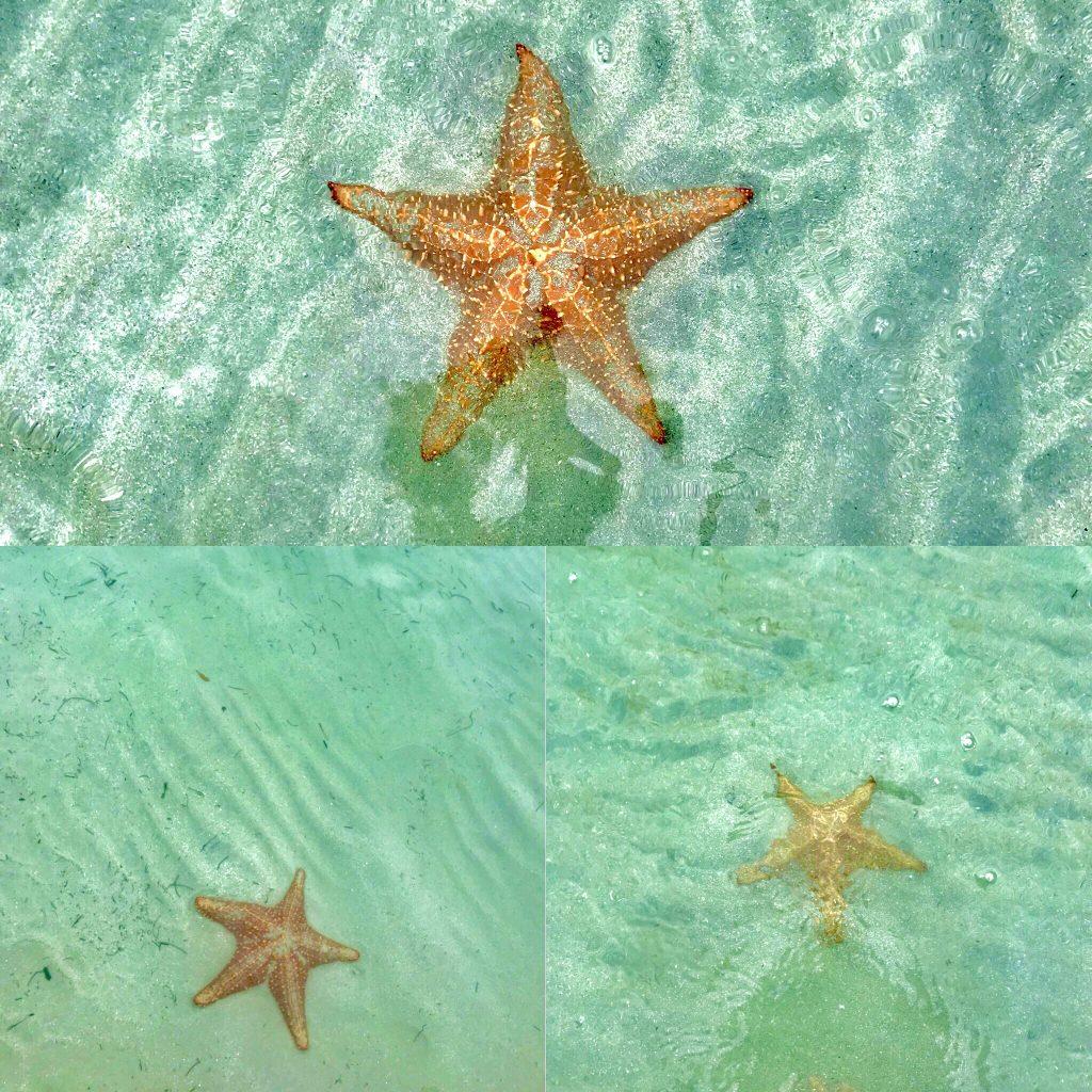 starfish beach - bocas del toro