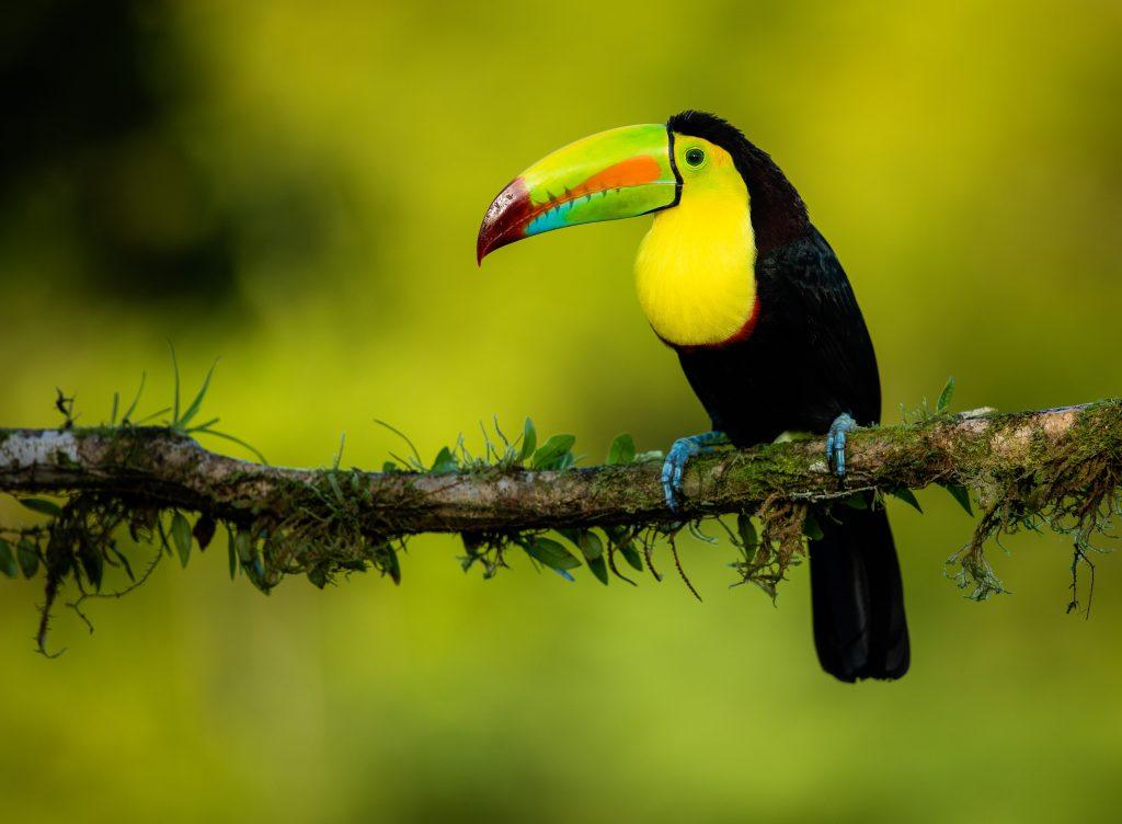 wildlife - costa rica